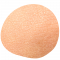 Normal facial skin